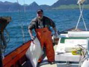 Spike with a Halibut